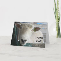MUTTON MORE TO SAY - THANK EWE THANK YOU CARD