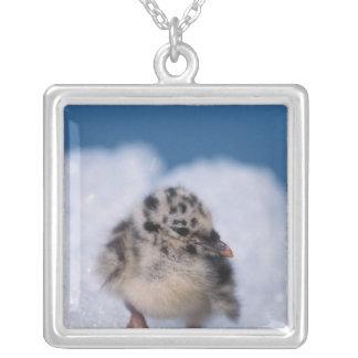 muw gull chick, Larus canus, on iceberg at Square Pendant Necklace