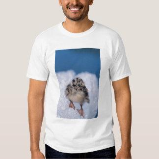 muw gull chick, Larus canus, on iceberg at T-Shirt