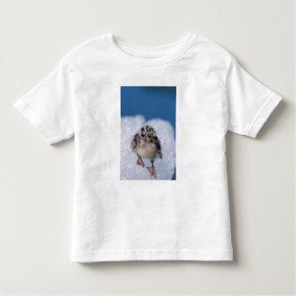 muw gull chick, Larus canus, on iceberg at Toddler T-shirt
