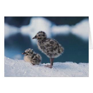 muw gull chicks, Larus canus, on an iceberg at 2 Card