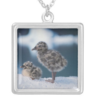 muw gull chicks, Larus canus, on an iceberg at 2 Square Pendant Necklace