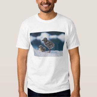 muw gull chicks, Larus canus, on an iceberg at 2 T-Shirt
