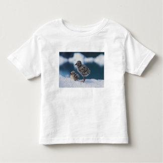 muw gull chicks, Larus canus, on an iceberg at 2 Toddler T-shirt