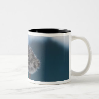 muw gull chicks, Larus canus, on an iceberg at 2 Two-Tone Coffee Mug