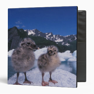 muw gull chicks, Larus canus, on an iceberg at 3 Ring Binder
