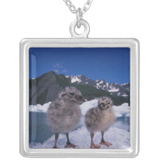 muw gull chicks, Larus canus, on an iceberg at Square Pendant Necklace