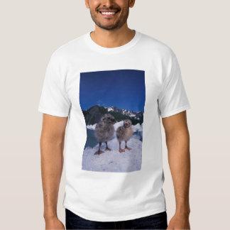 muw gull chicks, Larus canus, on an iceberg at T-Shirt