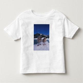 muw gull chicks, Larus canus, on an iceberg at Toddler T-shirt