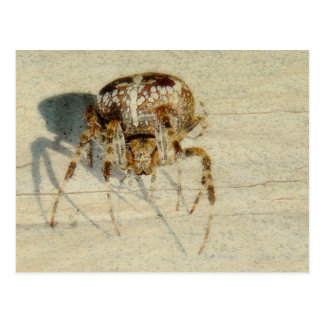 , Muy, araña asustadiza, melenuda grande Postal