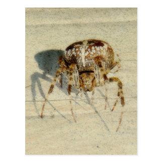, Muy, araña asustadiza, melenuda grande Tarjeta Postal