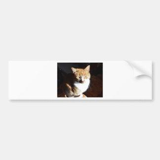 My Affectionate Look Nutmeg. Bumper Sticker