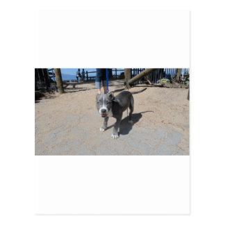My Amazing Puppy! Postcard