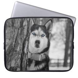 Neoprene Laptop Sleeve 15' with Siberian Husky Phone Cases design