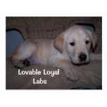 My baby, Lovable Loyal Labs Postcard