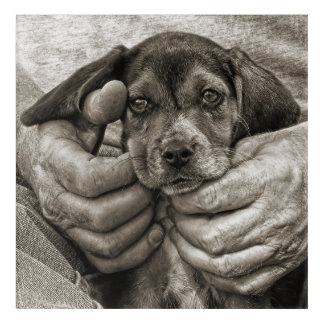My Beagle Buddy Antique Style Photographic Art