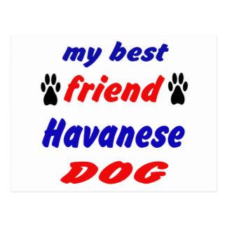 My best friend Havanese Dog Postcard