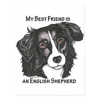 My best friend is a Black & White English Shepherd Postcard