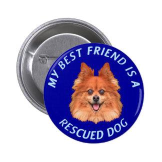 My Best Friend (Pomeranian) Pinback Button