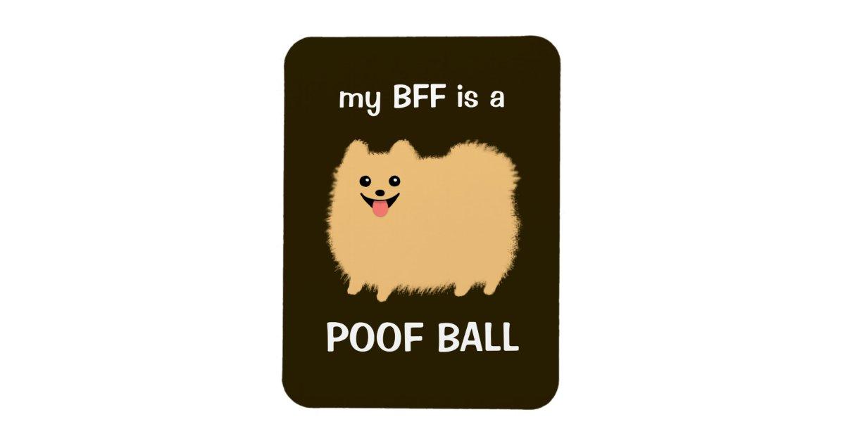 db7e5380 my BFF is a POOF BALL - Funny Pomeranian Dog Magnet | Zazzle.com