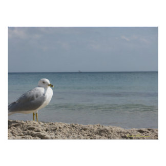 My Birdy Poster