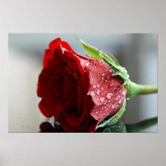 My Birthday Rose. Poster