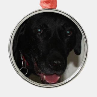 My Black Lab Ornament