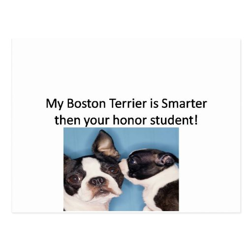 My Boston Terrier is Smarter then your honor.jpg Postcard
