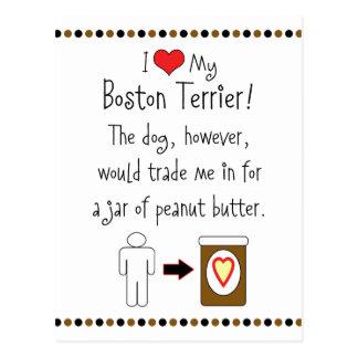 My Boston Terrier Loves Peanut Butter Postcard