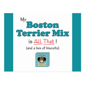My Boston Terrier Mix is All That! Postcard