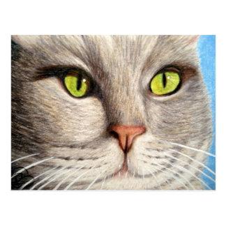 My Cat Micky Postcard