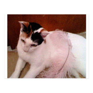 My Cat Postcard