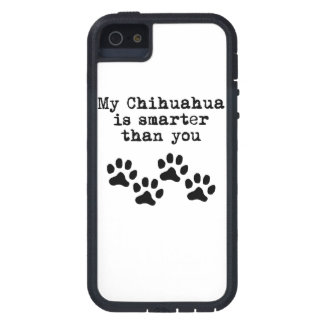 R Chihuahuas Smart My Chihuahua Is Smarter Than