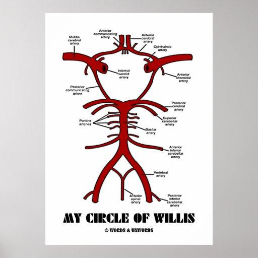 My Circle Of Willis (Anatomical) Poster
