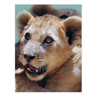 My Cute Lion Face Post Card
