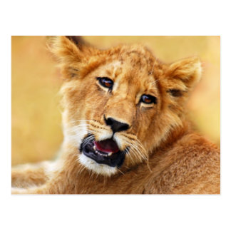 My cute lion face post cards