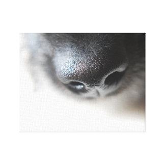 My Dog Nose Canvas | Lurcher Puppy Nose