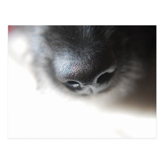 My Dog Nose Postcard | Lurcher Puppy Nose