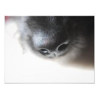 My Dog Nose Print | Lurcher Puppy Nose