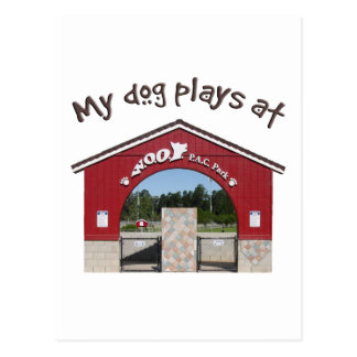 My dog plays at Woof Pac Park Postcard