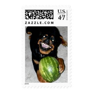 My Dog Snoop Likes Watermelons Postage