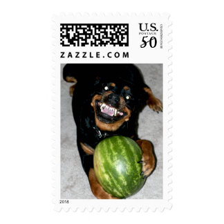 My Dog Snoop Likes Watermelons Postage
