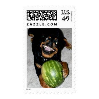 My Dog Snoop Likes Watermelons Postage Stamp