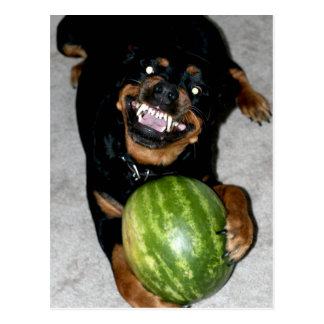 My Dog Snoop Likes Watermelons Postcard