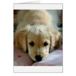My Eyes Adore You Greeting Cards