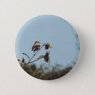 My fave little visitors.  #bird #nature #wildlife pinback button