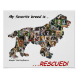 My Favorite Breed is Rescued poster