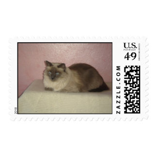 My favorite cat photo postage