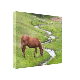 """""""My Favorite"""" Stretched Canvas Print"""