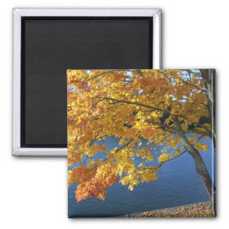 my favorite tree 2 inch square magnet